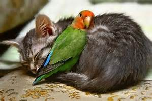 sleeping kitten and bird